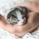 Newborn kittens: development and rules of care