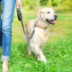 Dog leashes: what are and how to choose?