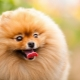 The most beautiful breeds of dogs