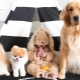 The cutest dogs: common features, top of the best breeds, choice and care