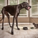 The tallest dogs in the world