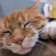 Six Finged Cats: Origin and Characteristics