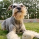 Dogs with a beard: types and their characteristics, selection and care