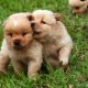 Variants of names for dogs-boys of small breeds