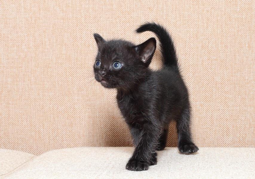Černá kočka stříkat