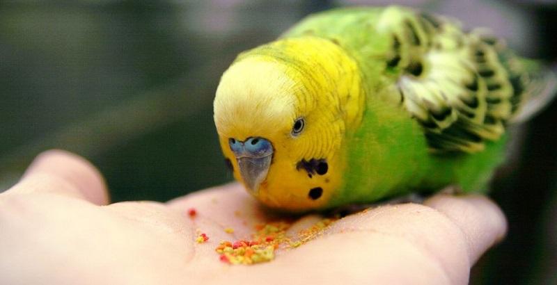 Unduh 61+  Gambar Burung Hantu Dari Biji Kacang Hijau HD Paling Bagus Gratis
