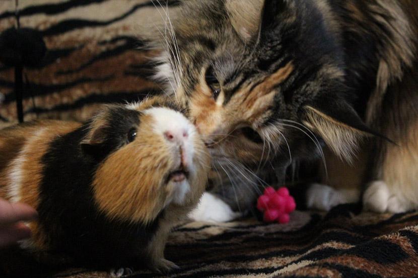 dívky s huňatou kočičkou