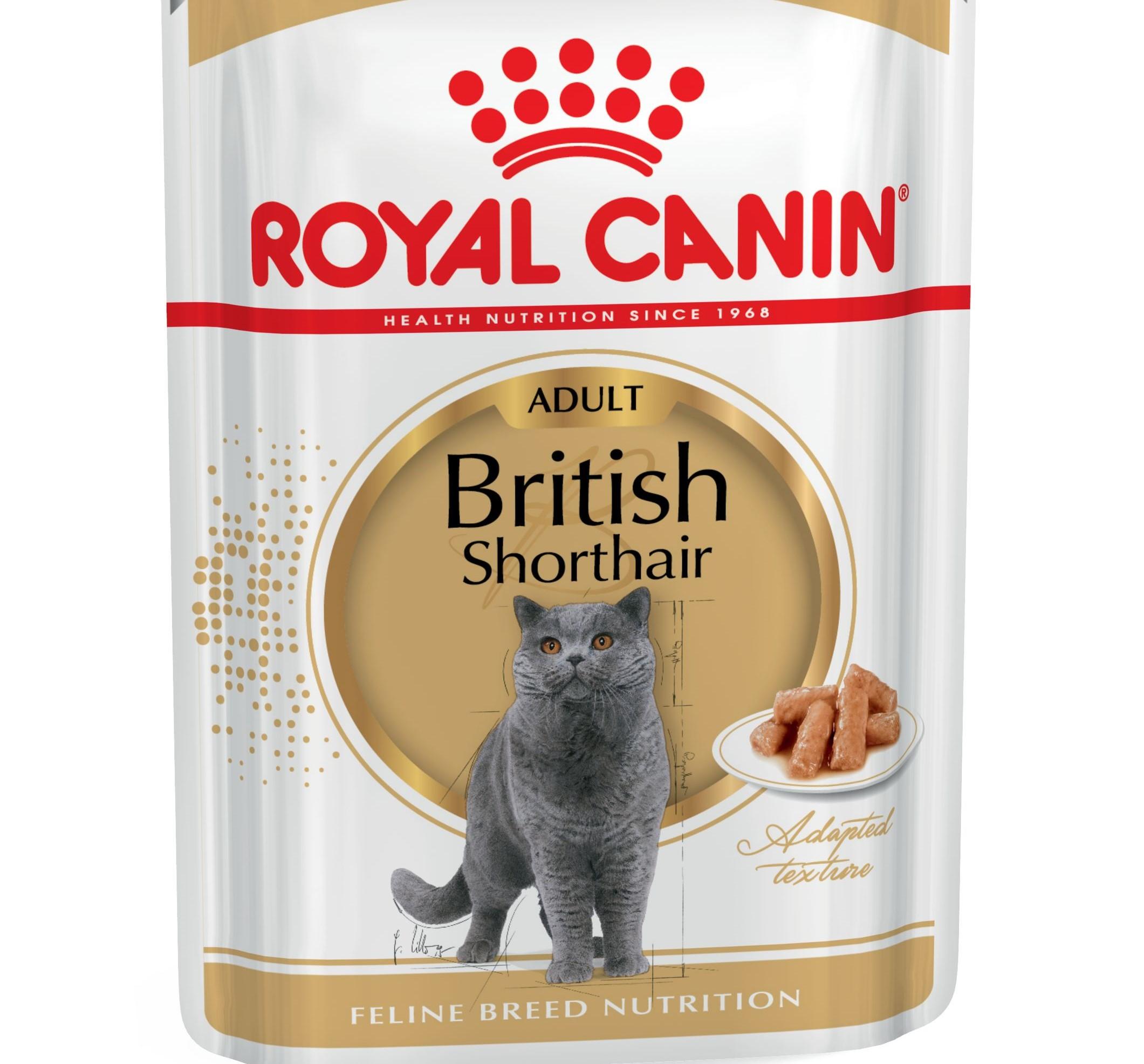 Makanan Untuk Anak Kucing British 25 Gambar Bolehkah Mereka Memberi Makanan Kering Semak Semula Suapan Premium Terbaik Dan Pilihan Lain