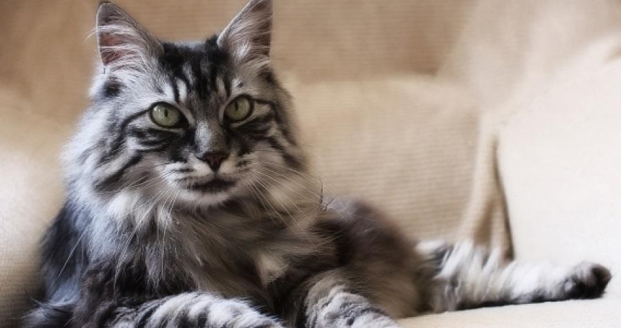 divovski maca porno