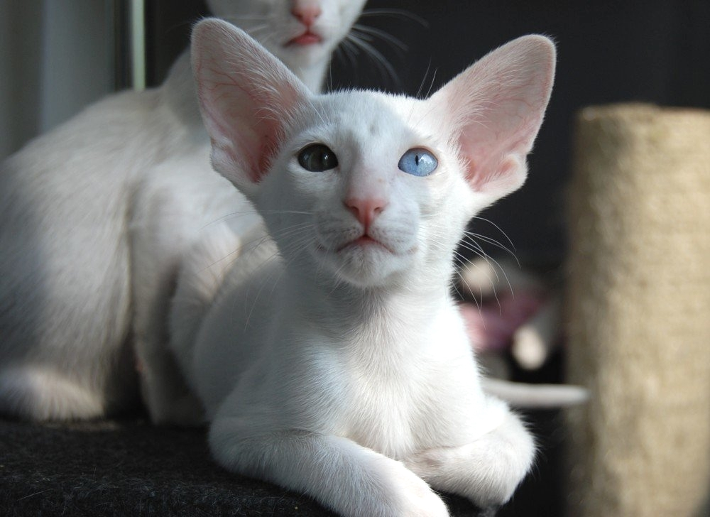 vruća ebanovina maca slika tajlandski gay sex tumblr