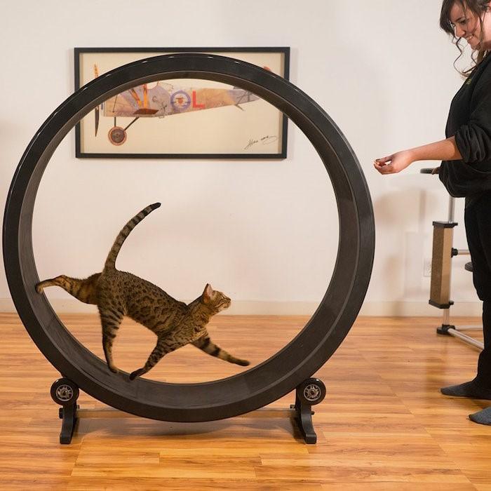 استخدم عجلات القطط