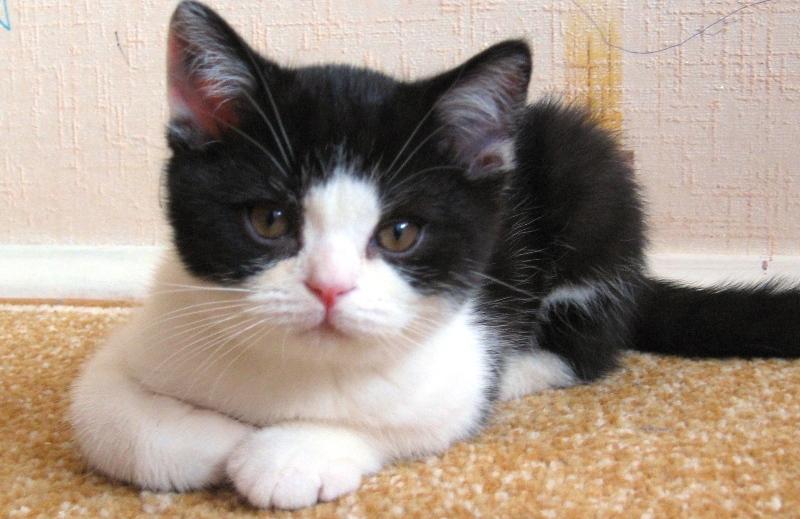 prilično crn maca crne pičke jedu slike