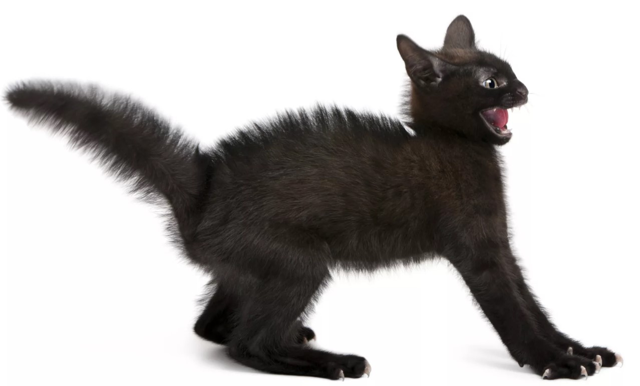 docela těsná černá kočička