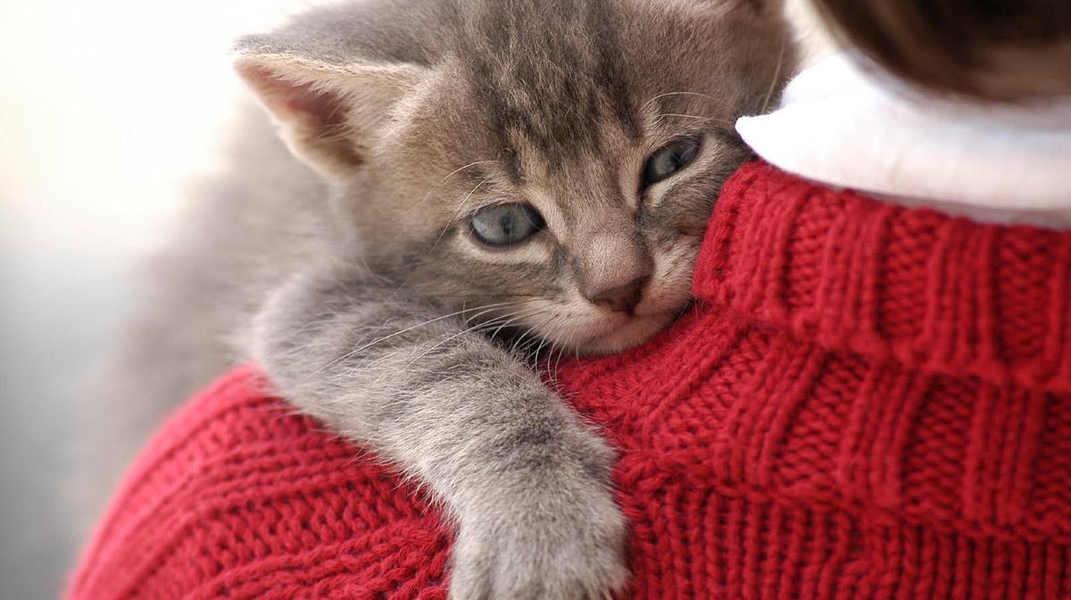 Bilakah Anak Kucing Menukar Gigi 30 Gambar Adakah Kucing Dan Kucing Mempunyai Gigi Susu Gejala Mengubah Gigi Menjadi Kekal