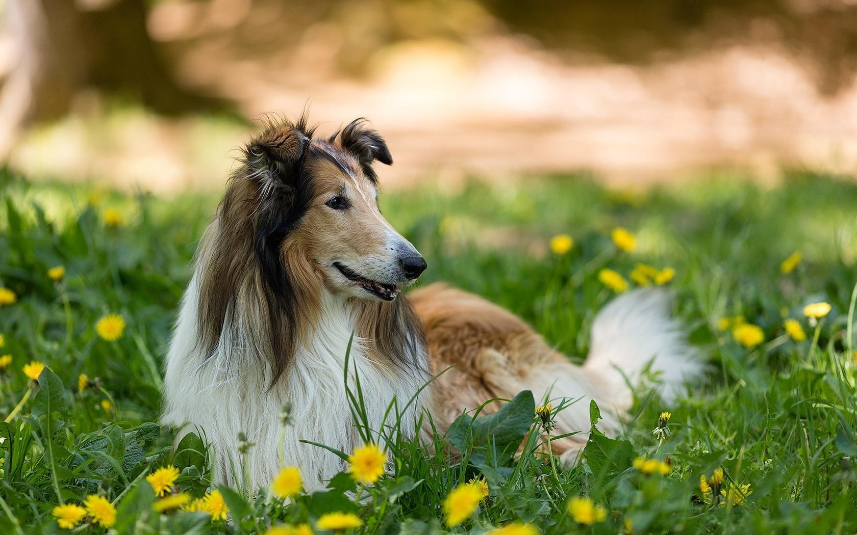 Gembala Anjing 44 Gambar Baka Popular Dengan Nama Anjing
