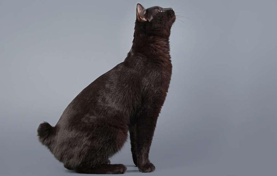videozapisi s crnim mačkama
