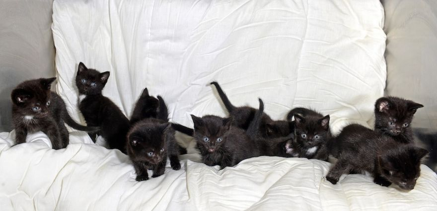 Debele djevojke crna maca