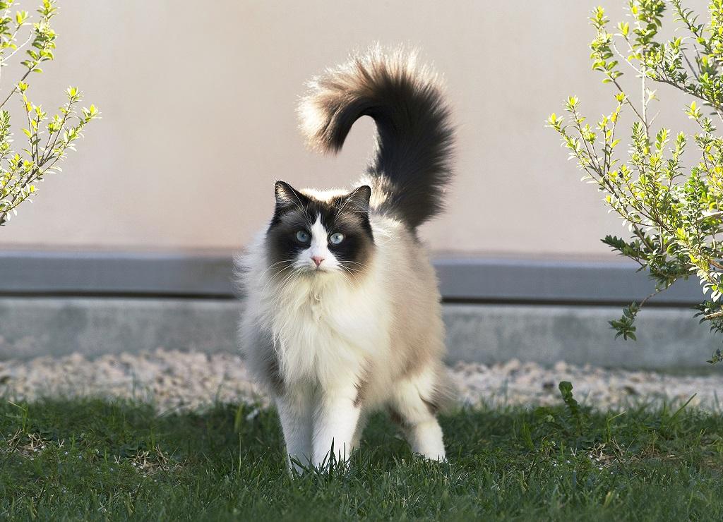 Tlustá černá kočička lesbické trubice.
