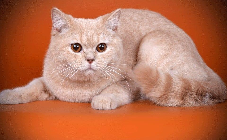 je Chanel datovania Veľká mačka
