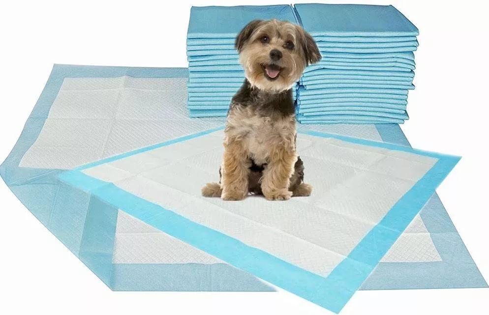 Bagaimana untuk mengajar anjing ke jalan? 17 gambar