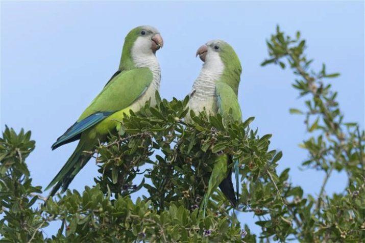 Pic obrovské vtáky
