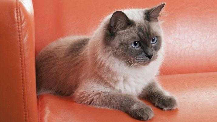 Kapající kočička lesbička