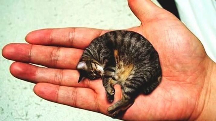 Kleinste katze der welt