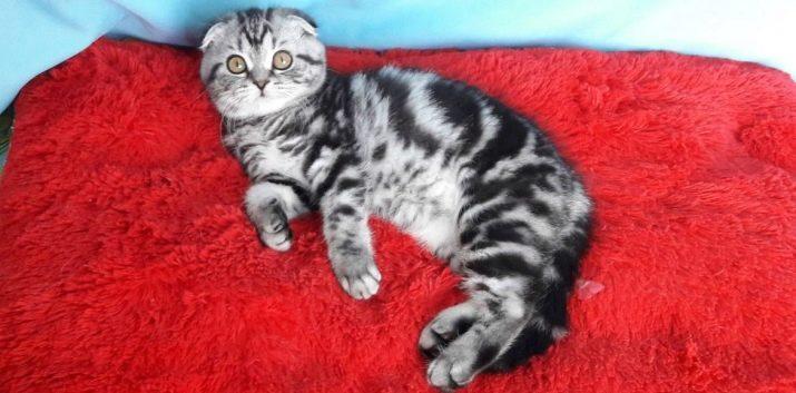 otvorene fotografije maca